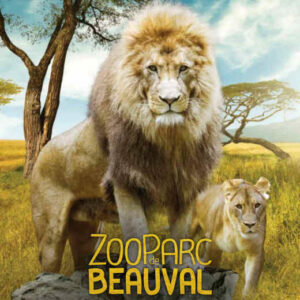 Zoo de beauval terre des lions