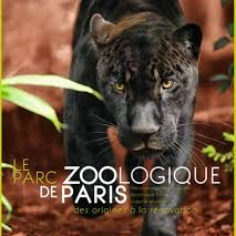 Parc zoo de Paris panthere