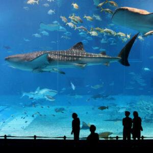 Les aquariums
