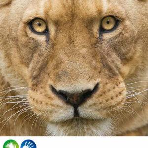 Safari Peaugres Lionne